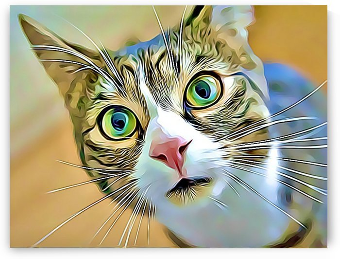 CATS2 by MIRIAM