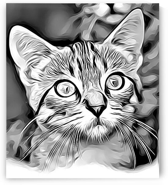 CAT10 by MIRIAM