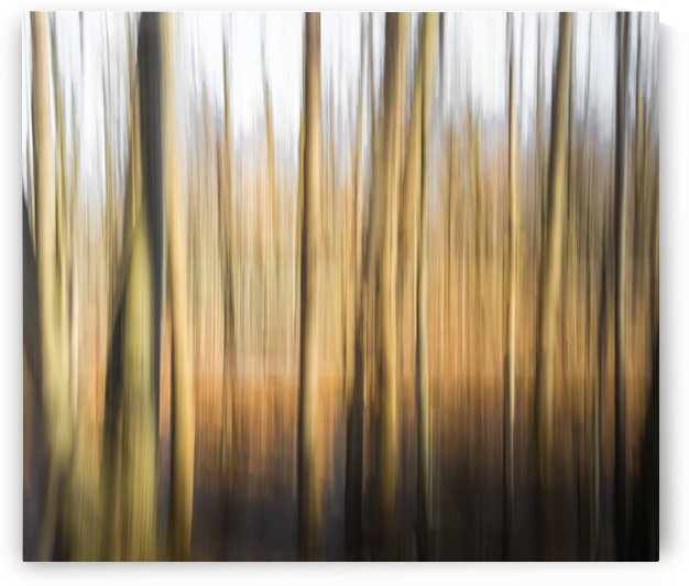 Lost In The Forest - Perdue Dans La Foret by Carole Ledoux Photography
