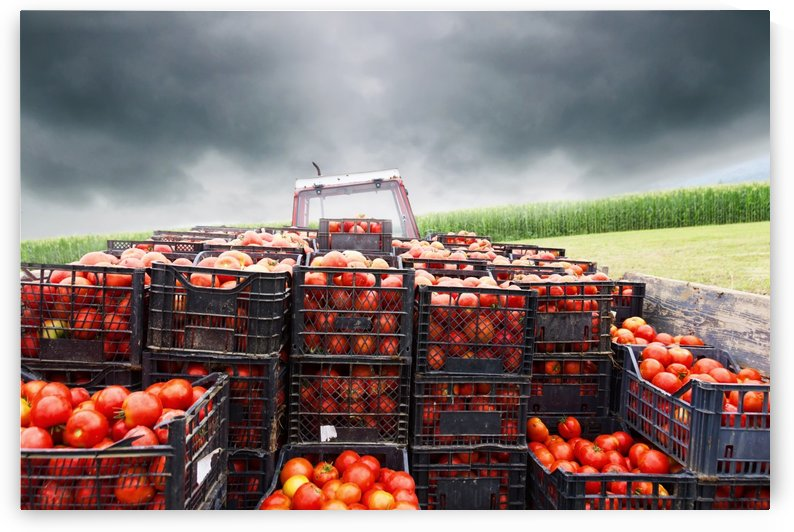 tractor charged with red tomatoes by Besa Art