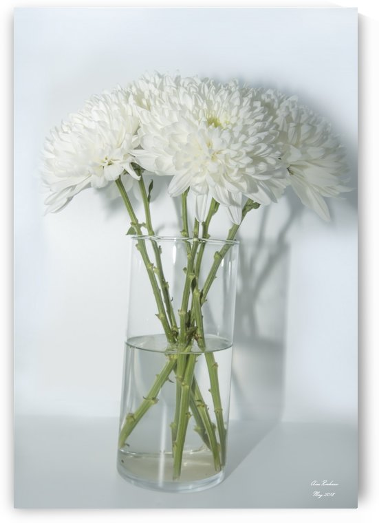 Mum Flower in a Vase by crystalfind