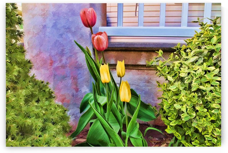 Painted Tulips by Jacqueline Sleter