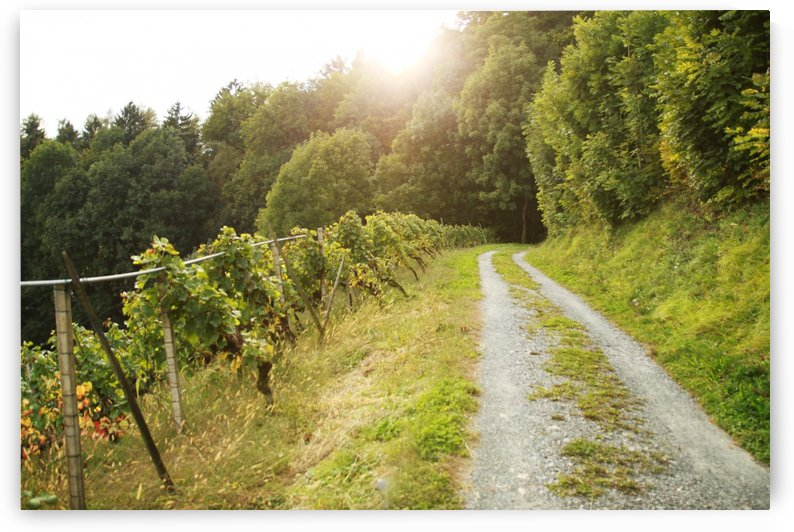 footpath at vineyard landscape by Besa Art