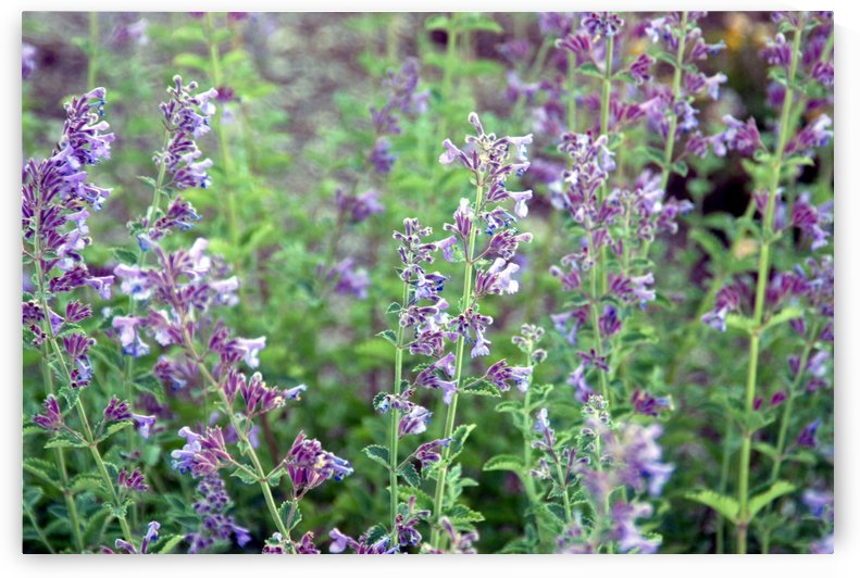Wildflowers by Robin Buckley