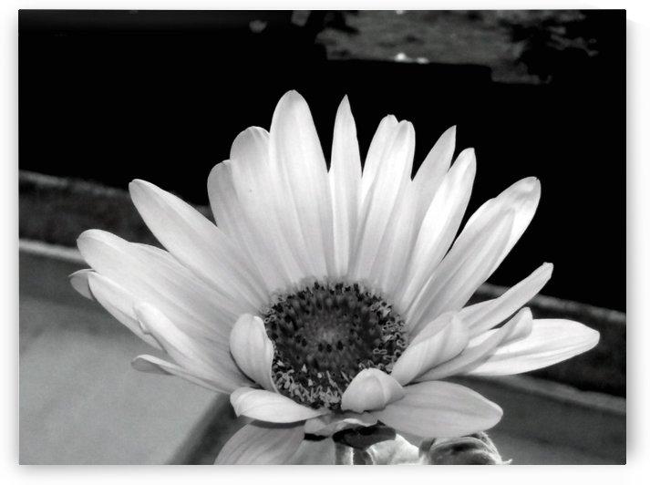 Beauty by Nilu Mishra