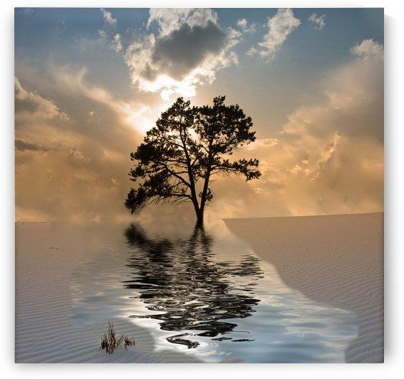 Desert Tree by Bruce Rolff