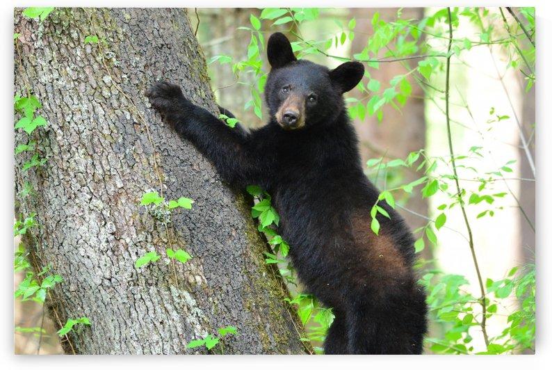 3699-Tree Hugger by Paul Winterman