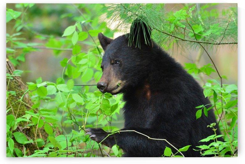 3646-Bear Lunch by Paul Winterman
