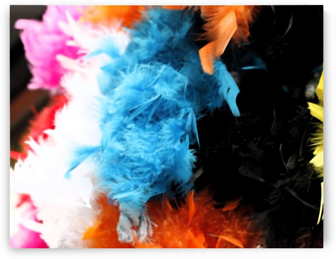 Colourful Feathers by Maria Virginia Castro