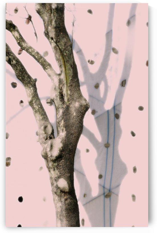 Istambul Dancing Tree by Maria Virginia Castro