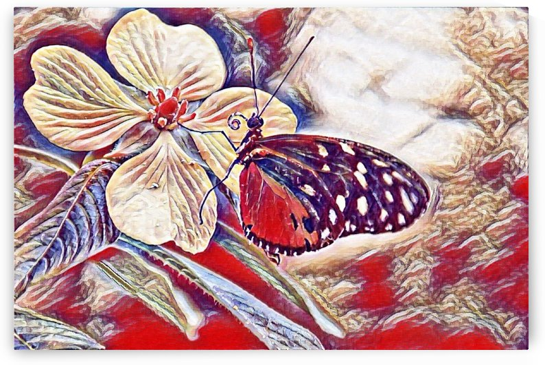 Butterfly Paint by Thecanvasmom