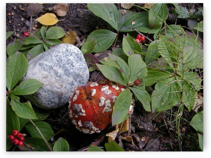 Red Mushroom & Rock by Jim Jones