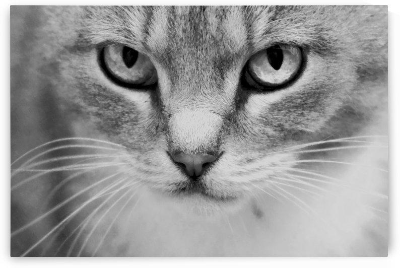 Cat by Kirsten Warner