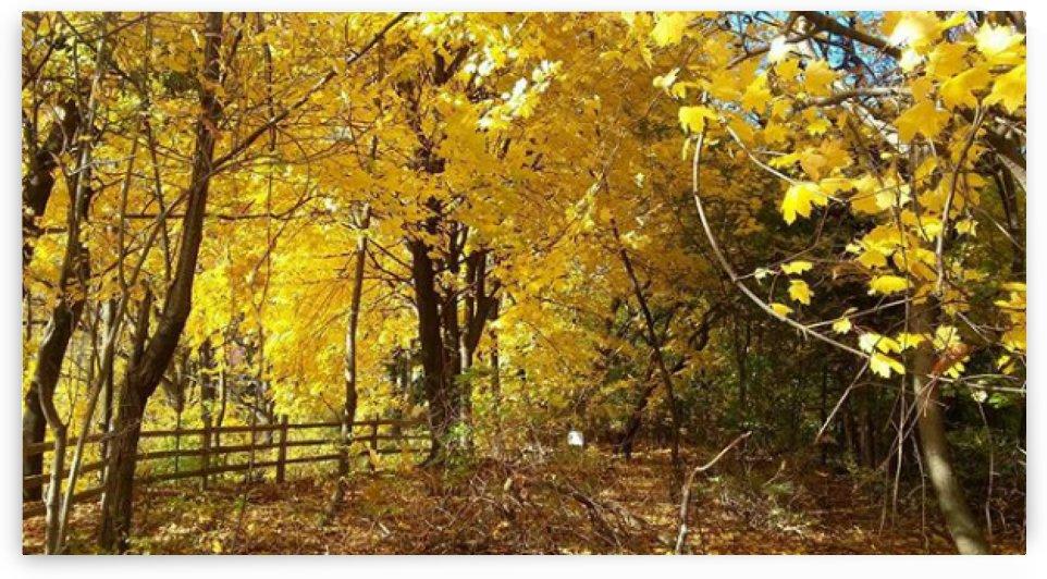 Autumn Season by Kayathiri Vaithilingam
