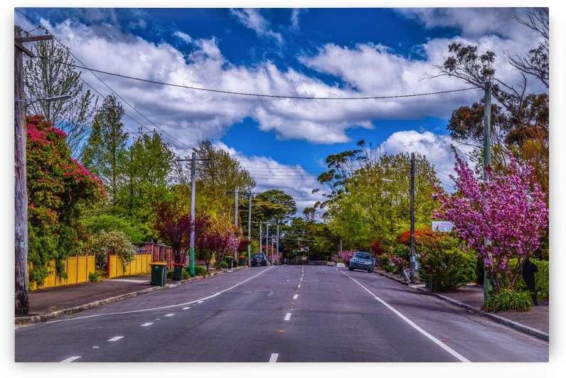 Road To Nature by Birsen Oz