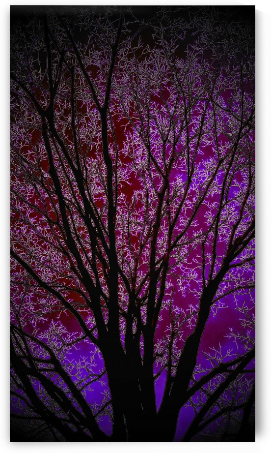 Art of a Purple Tree by Jeremy Lyman