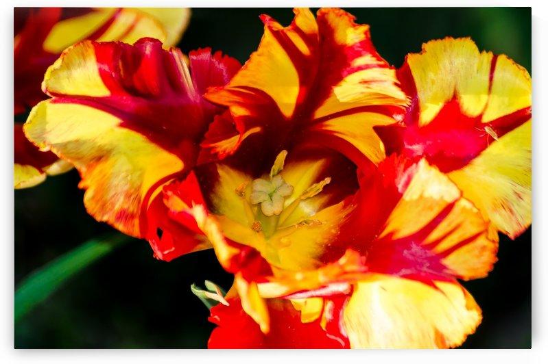 Tulip in Fringed Dress by Ann Romanenko