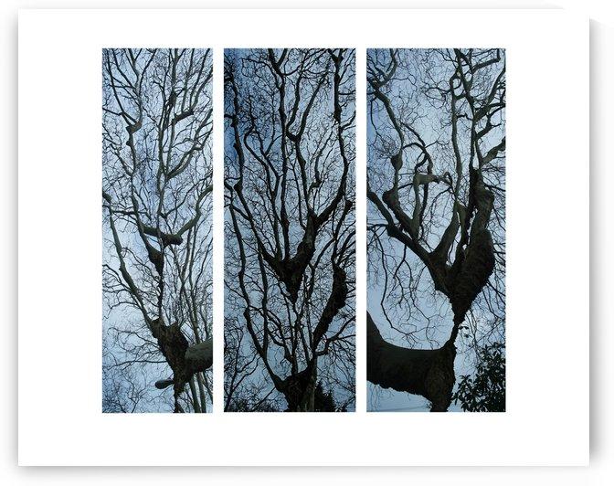 3 trees color  by Margaret Najder