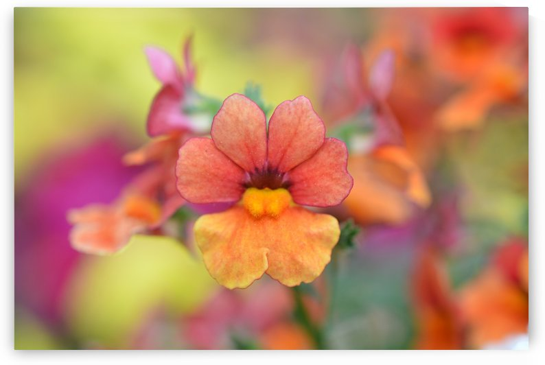Orange Flower Photograph by Katherine Lindsey Photography