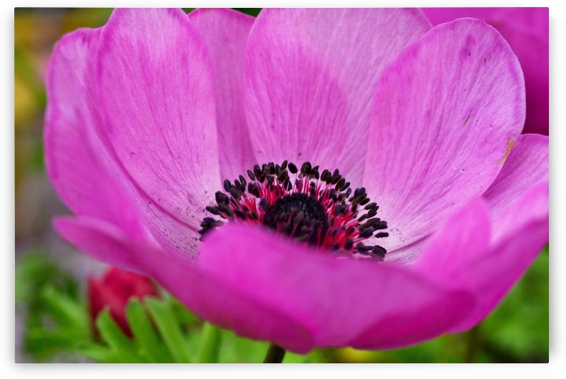 Pink Flower Photography by Katherine Lindsey Photography