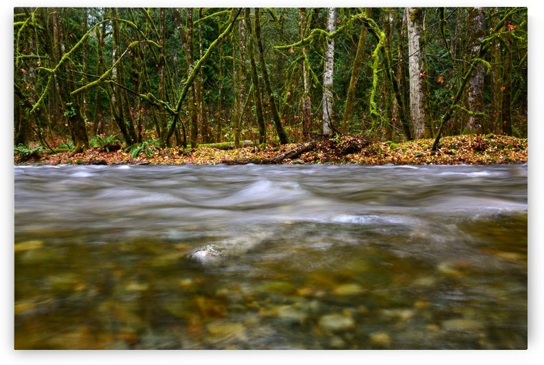 Goldstream River BC by Rachael Griffin