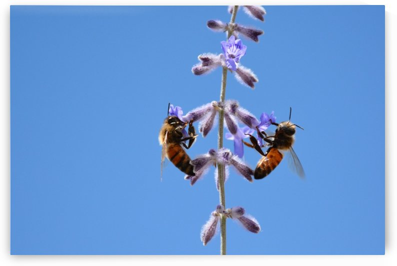 Two Bees On Vine Photograph by Katherine Lindsey Photography