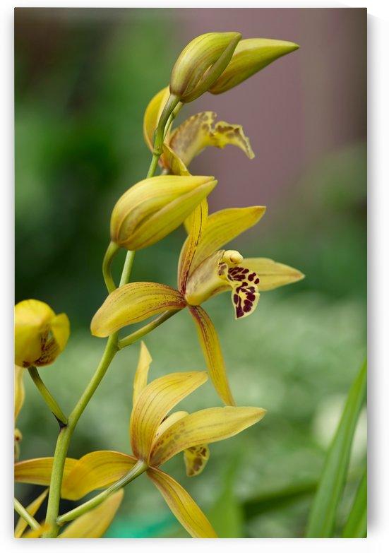 Yellow flowers stem by Krit of Studio OMG