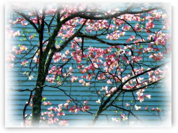 Pink Cherry Blossoms Art Print by Katherine Lindsey Photography