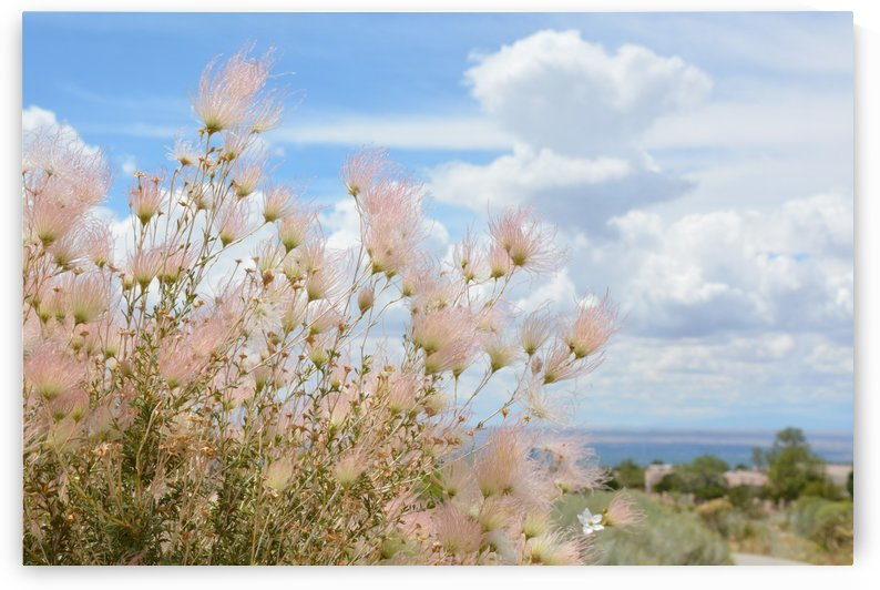 New Mexico Pink Flora Photograph by Katherine Lindsey Photography