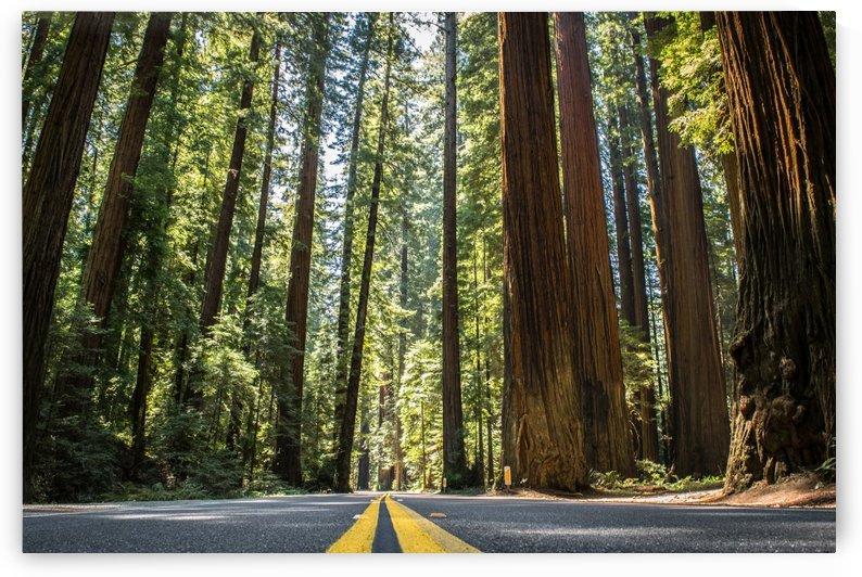 Road Trip by Clare Kathleen Cornelius