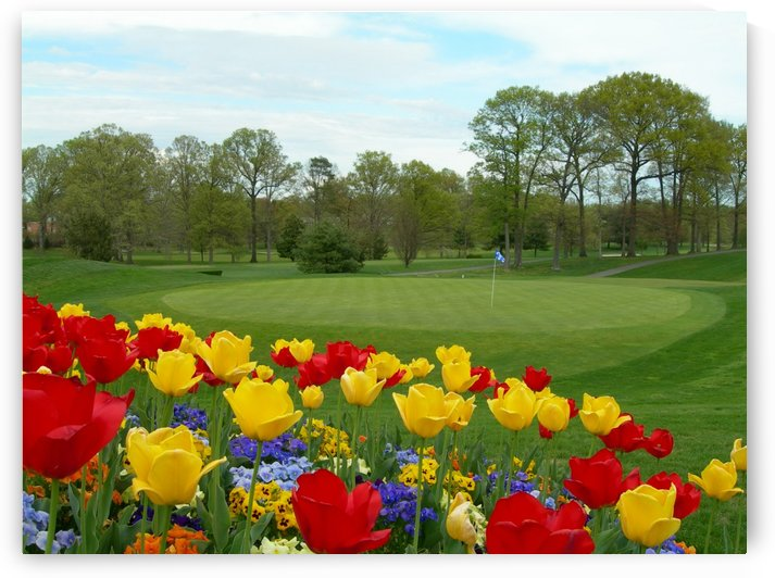 Red Yellow Tulips On A Golf Course Photography by Katherine Lindsey Photography