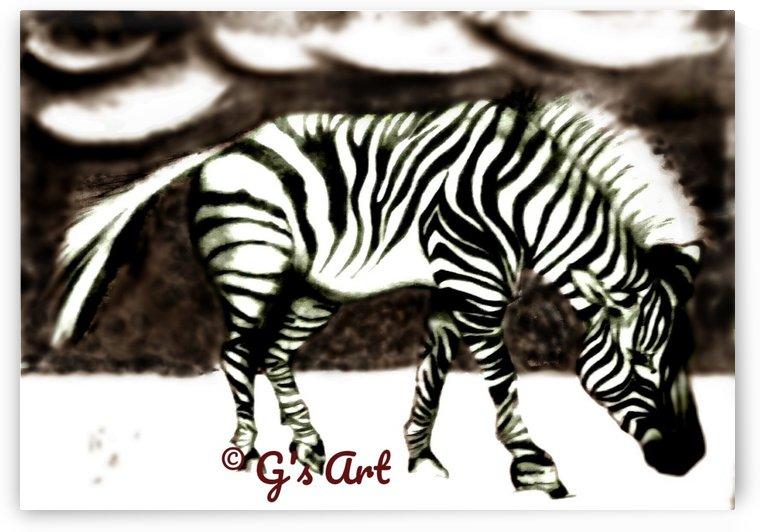 zebra grazing by Gerald Botha