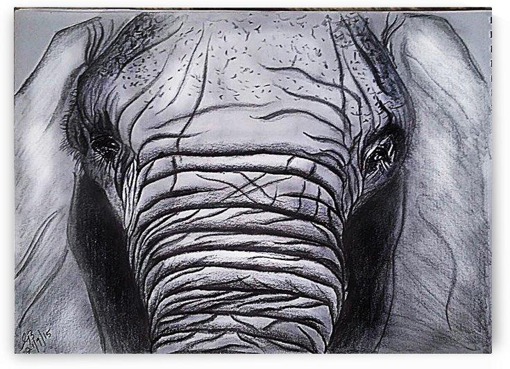 Elephant stare by Gerald Botha