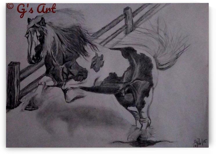 Wild horse by Gerald Botha