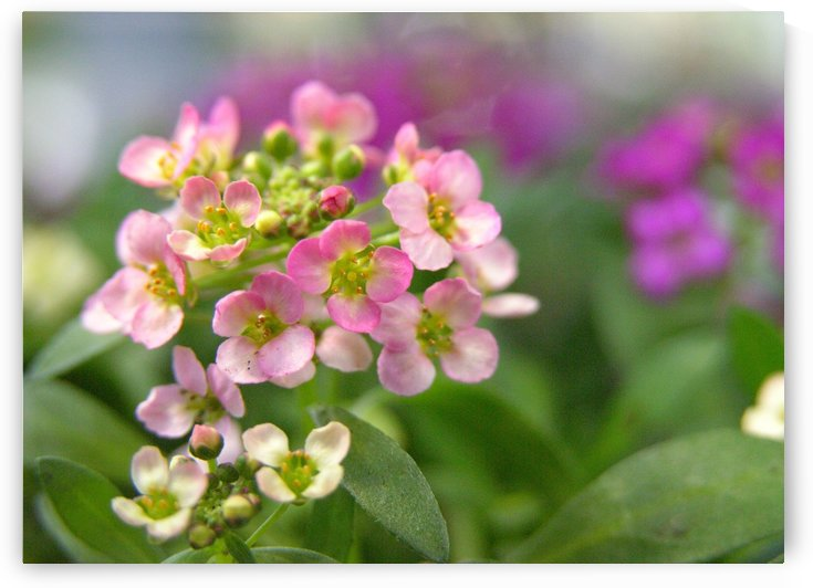 Small Pink Flowers Photography by Katherine Lindsey Photography