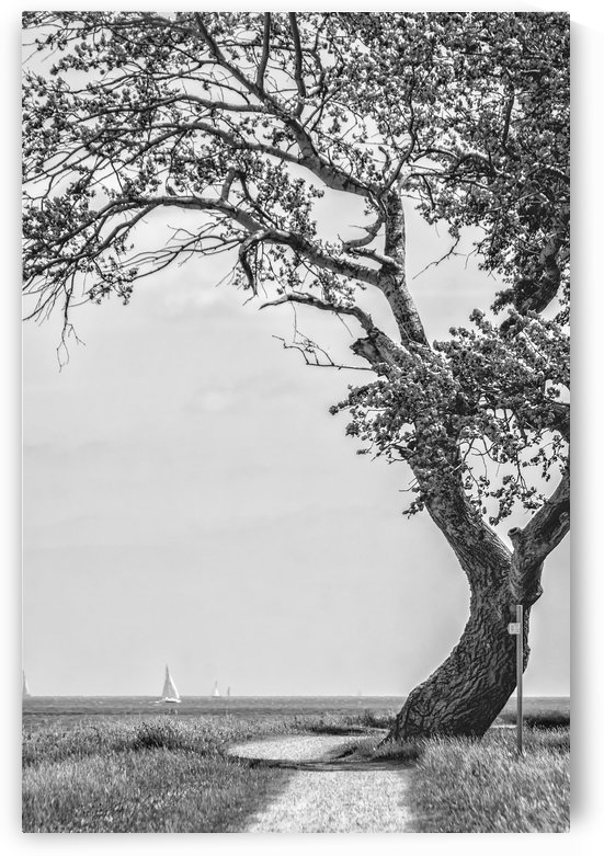 The Tree by Kirsten Warner