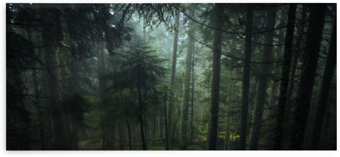 Misty green  by Marko Radovanovic