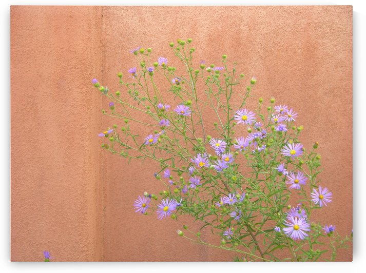 New Mexico Purple Flora Photogrraph by Katherine Lindsey Photography