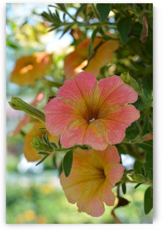 Beautiful Orange Flowers Photograph by Katherine Lindsey Photography