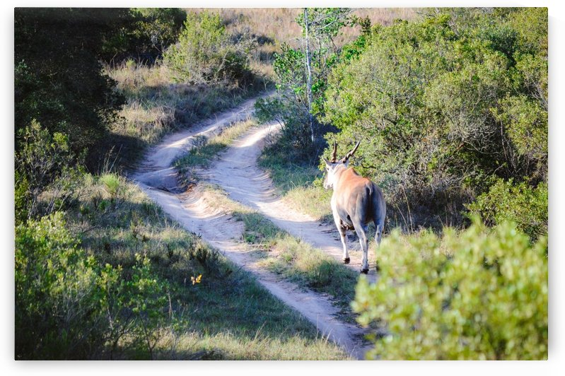 A Deer on the Path by Creative Chronicles