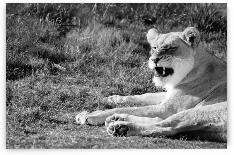 Roar by Creative Chronicles