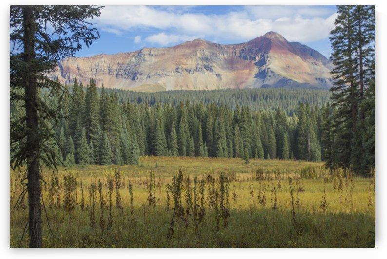 Range Through the Trees by Peter Kaple