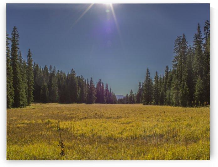 Across the Field  by Peter Kaple