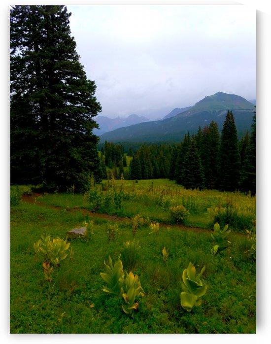 Misty Mountain Trail by Peter Kaple