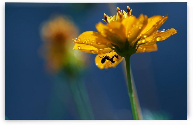 Little mantis under yellower flower by Krit of Studio OMG