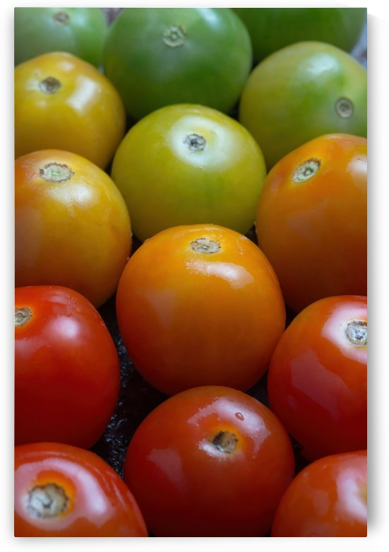 Colorful tomatoes by Krit of Studio OMG