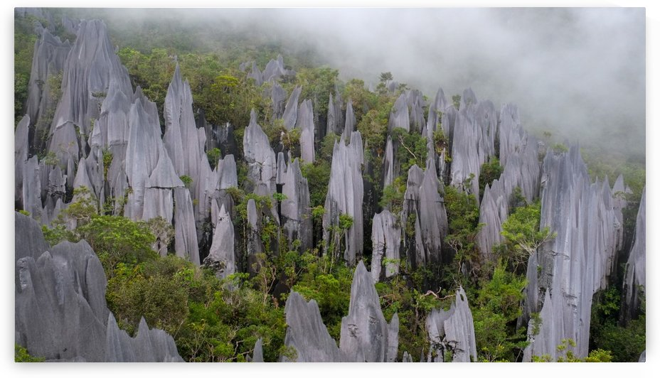 Mulu Pinnacles  by MingChian