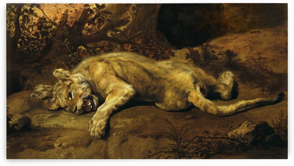 Lioness Relaxing_OSG by One Simple Gallery