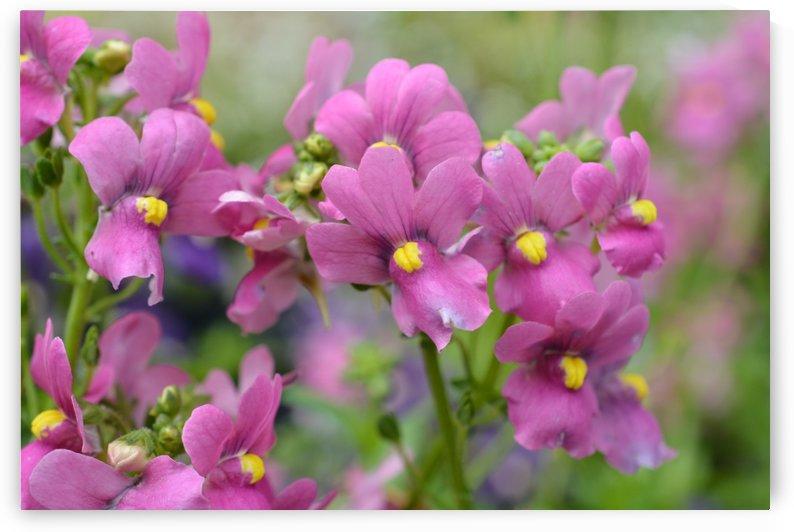 Beautiful Purple Flowers Photograph by Katherine Lindsey Photography