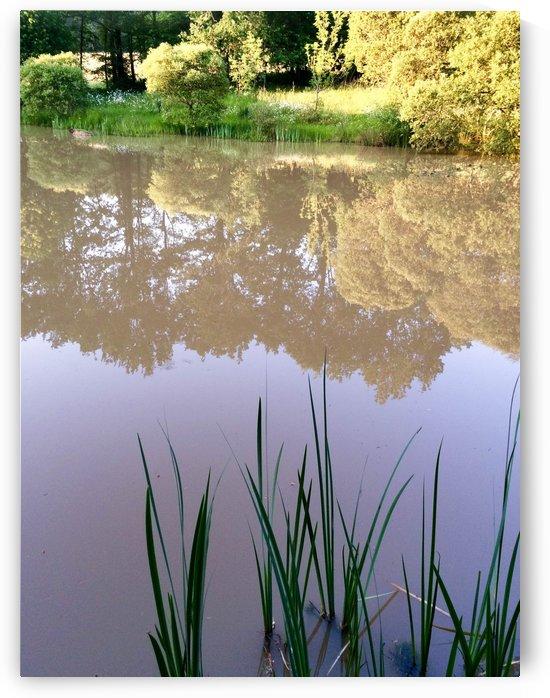 Pond by Douglas Kay